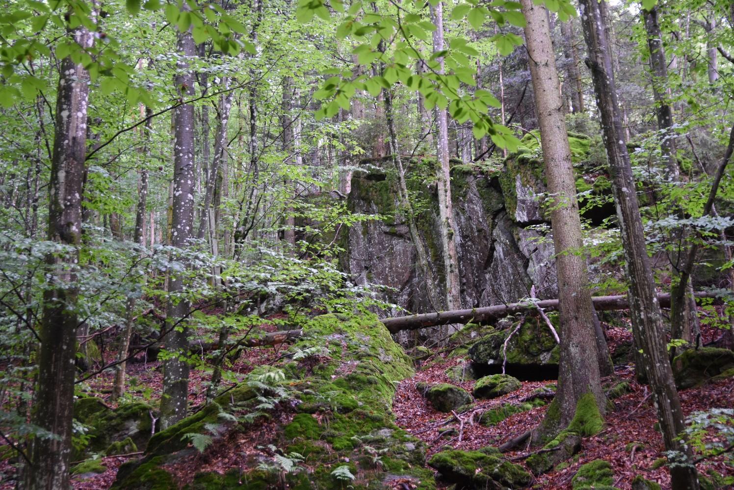 Wald-II