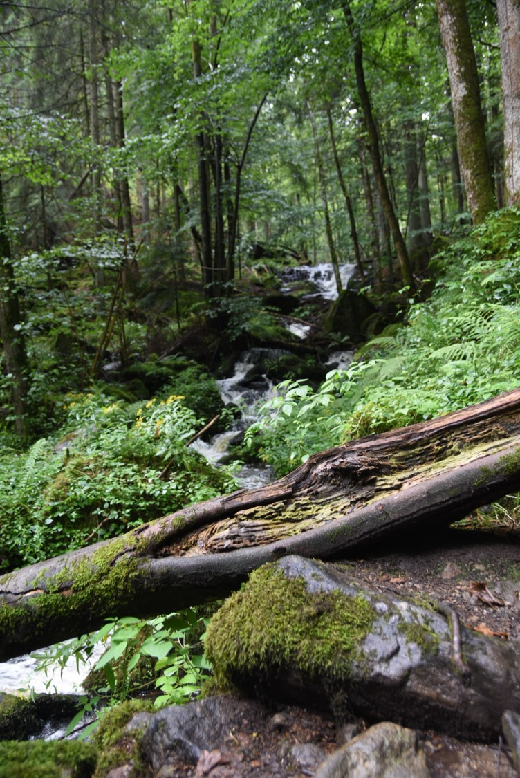 Wald-III